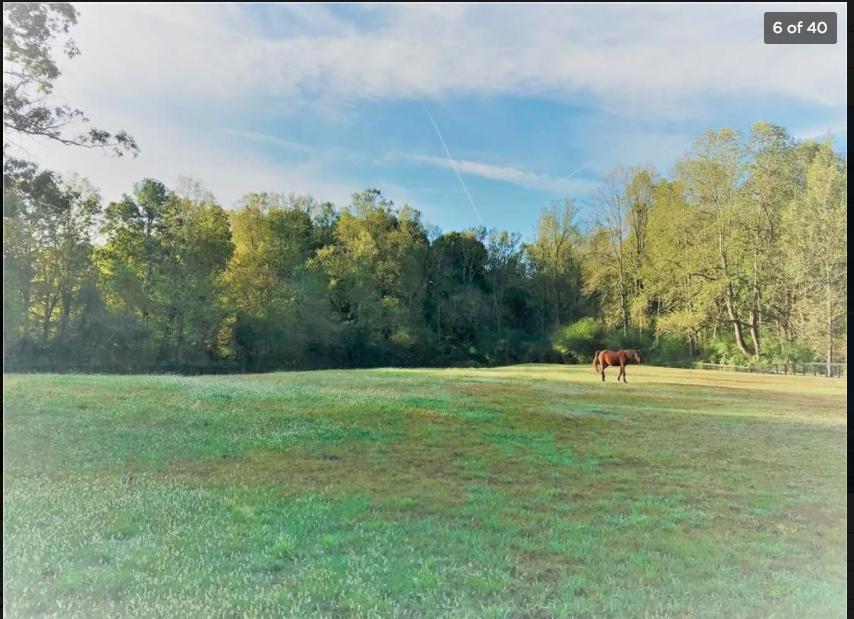 big back pasture