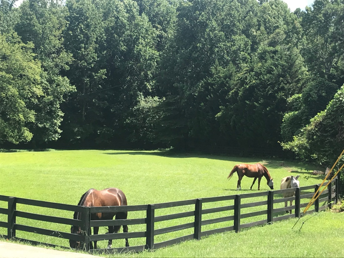 Horses front pasture day one